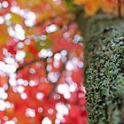 Autumn by Elda
