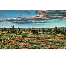 Elephant at kruger park Photographic Print