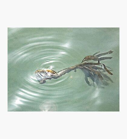 Sea Treasure Photographic Print