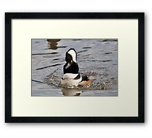 Putting On A Show For The Ladies Framed Print