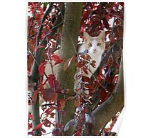 Louis in the Tree Poster
