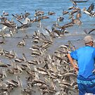 Admiring the huge Number of Pelicans - Admirando  el Numero grandote de Pelicanos by PtoVallartaMex