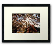 Fall in BC Framed Print