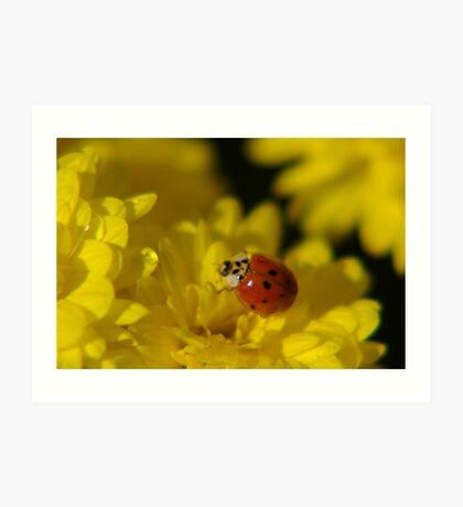 Beetle on Yellow Bloom Art Print
