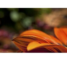 Orange Flower Petals Photographic Print
