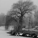 Tree in B&W by Gary Lengyel