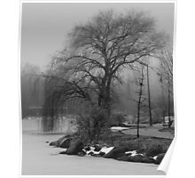 Tree in B&W Poster