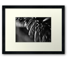Blue Spruce Needle Study in Black and White Framed Print