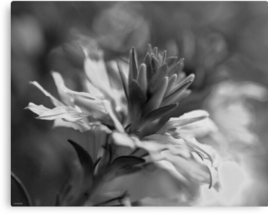 Black and White Flower Macro by William Martin
