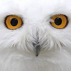 Snowy Owls by Jim Cumming