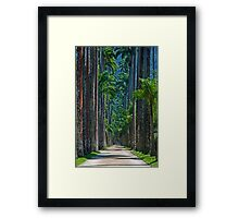Tall and slim ... Framed Print