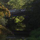 Mirrored Bridge In The Jungle - Puente Reflejado En La Selva by Bernhard Matejka