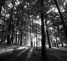 Shadow Trees by Scott Frederick