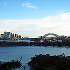 evening - sydney harbour by Floralynne