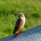 Little Sunning Bird by RielTeris