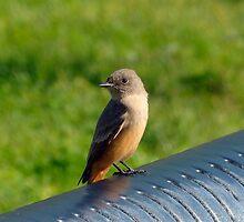 Little Sunning Bird by RielTeris