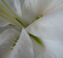 In the Depth of Lily by DEB CAMERON