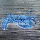 blue crab by Rishi Kant Joshi