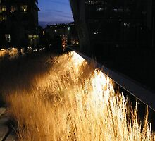 High Line at Night, New York's Elevated Park and Garden  by lenspiro