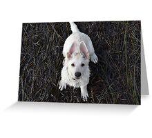 White german shepherd puppy sitting Greeting Card