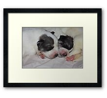 Goliath And His Little Brother  Framed Print