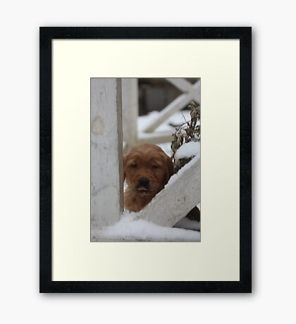 Brady Raspberries To You Framed Print