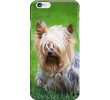 mini yorkshire terrier pup playing iPhone Case/Skin