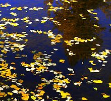 """Autumn Leaves and Reflections"" by Lynn Bawden"