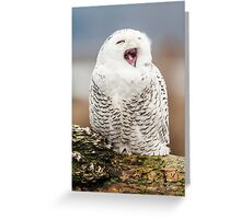 Snowy Owl Yawning Greeting Card