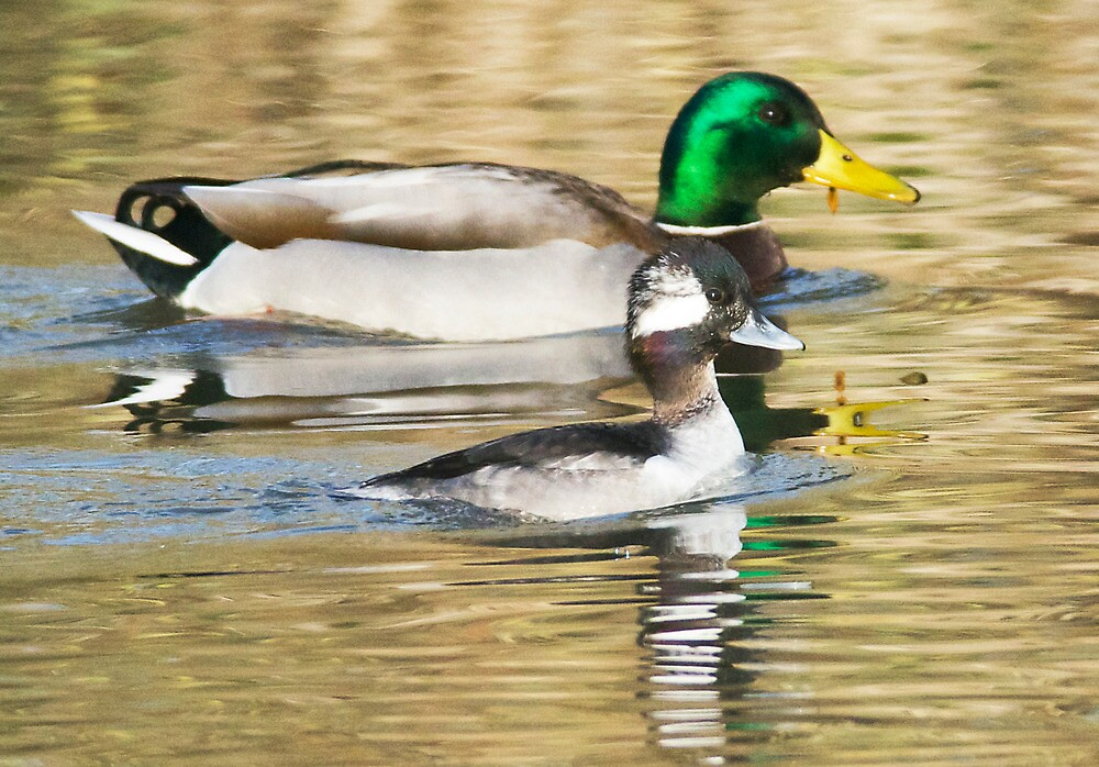 Proud to Be a Duck by Kenneth Haley