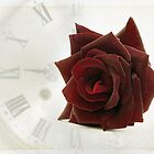 Timeless Love - A Red Red Rose by Clare Colins