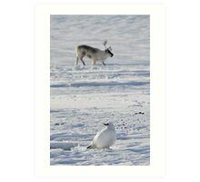 Svalbard ptarmigan and reindeer in Adventdalen Art Print