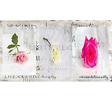 My rose garden Photographic Print
