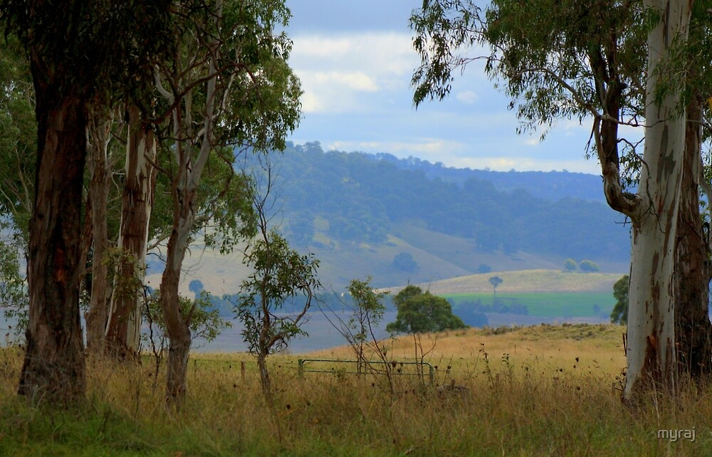 Farmland ...framed by gum trees by myraj