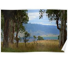 Framed by gum trees Poster