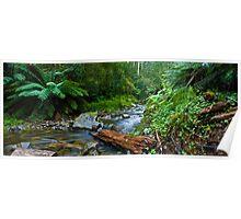 Otways Rainforest Poster