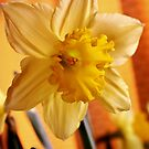 The Star of Spring! by MichelleRees