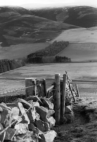 Stone Wall at Cademuir near Peebles by rosie320d
