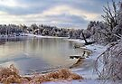 Ice Storm In The Cove by Carolyn  Fletcher