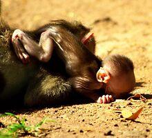 Monkey business by Ritu Lahiri