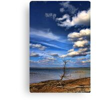 Another Little Tree Canvas Print