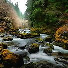 It Must Be A Dream by Charles & Patricia   Harkins ~ Picture Oregon