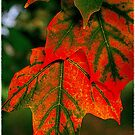 Red and green autumn leaves...you can't bring me down by jammingene