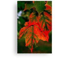 Red and green autumn leaves...you can't bring me down Canvas Print