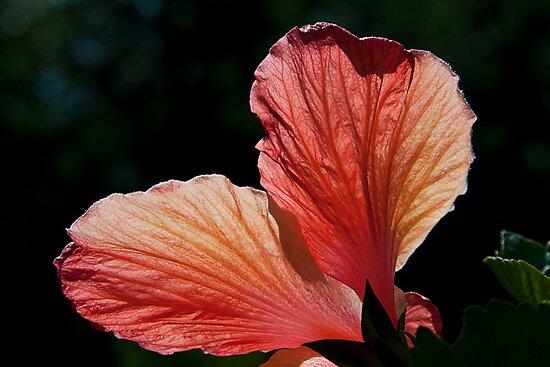 Petals by Yuri Lev