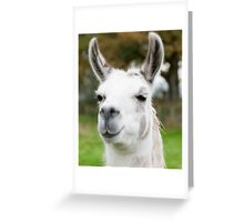 White and grey llama Greeting Card