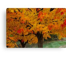 Colorful Maple tree Canvas Print