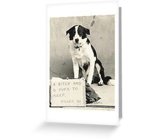 It's A Dogs Life Greeting Card