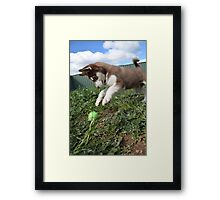 Jax-husky/malamute puppy playing  Framed Print