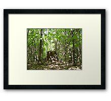 Elven thrown Framed Print